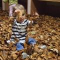 Zabawa liśćmi