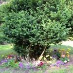Żłobkowy Ogród